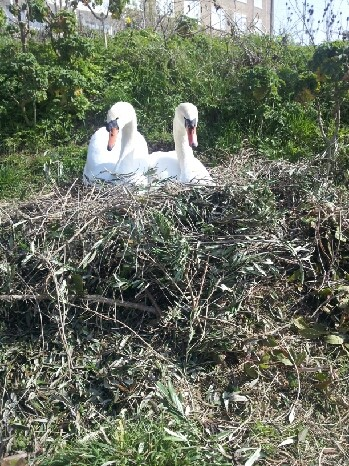 Cob & Jen on nest together